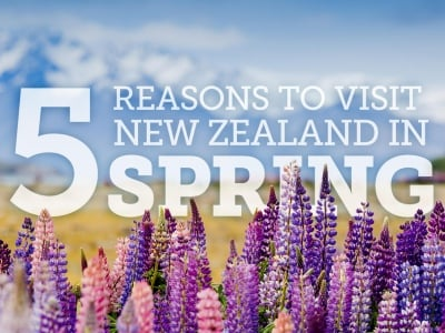 spring in new zealand3