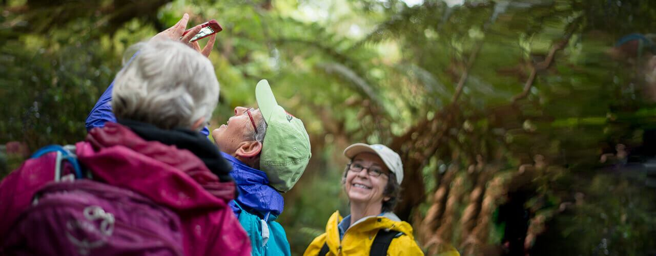guided bush walks