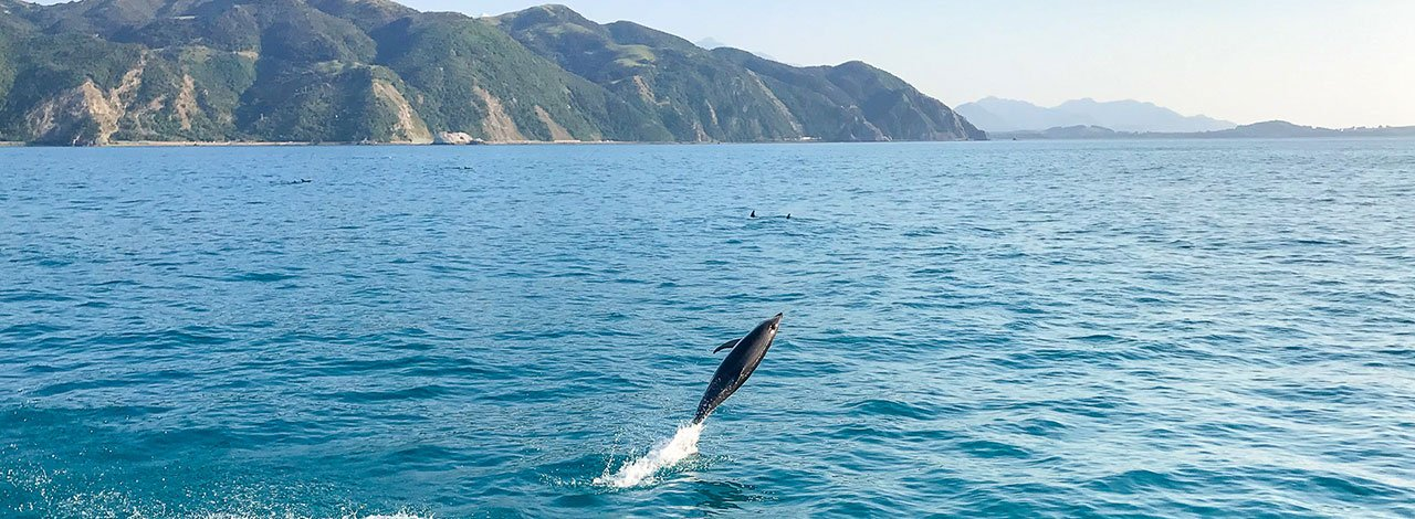 New Zealand wildlife | Dolphin