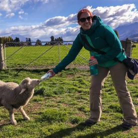 Feeding a Sheep with a Bottle at Otago, New Zealand