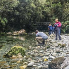 Drinking water from river at Fiordland National Park, New Zealand