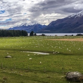 Sheep Farm at Mount Nicholas, Otago New Zealand