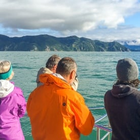 Boat tour at Kaikoura, Canterbury New Zealand
