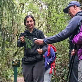 Guided Tour at Milford Track, Fiordland National Park New Zealand