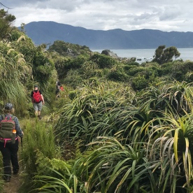 Walking the Martins Bay, Fiordland National Park Southland New Zealand