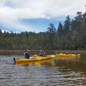 Kayaking through native forest at Okarito lagoon