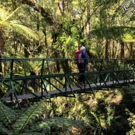 Hollyford Track Bridge, Fiordland National Park Southland New Zealand