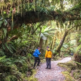 Milford Track Rainforest, Fiordland New Zealand
