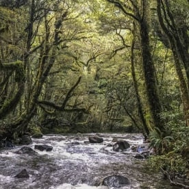 Milford Track Rainforest, Fiordland National Park Southland New Zealand
