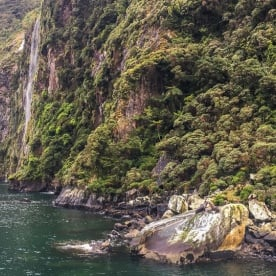 Seals at Milford Sound, Fiordland New Zealand