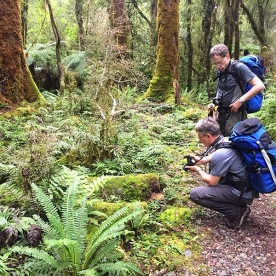 photo time in the hollyford track forest