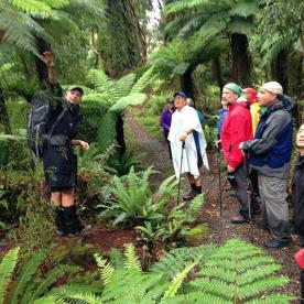 guide and walkers on the hollyford track new zealand
