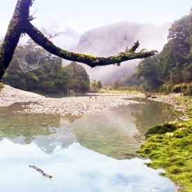 the amazing hollyford river