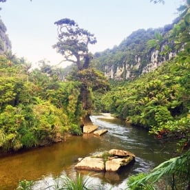 view of the pororari river paparoa national park new zealand