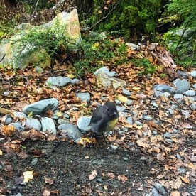 A little Robin Bird came out to say hello at the Routeburn Track