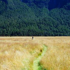 A pathway through the grasses in the incredible  Eglinton Valley
