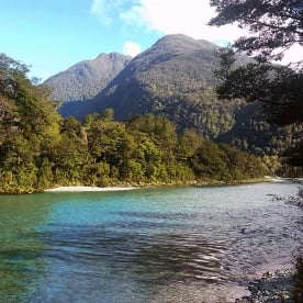 View on Hollyford Track River