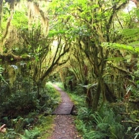 milford track rainforest