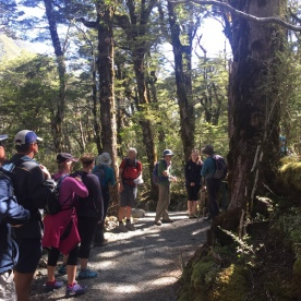 Hikers and Guide in Arthurs Pass Forest