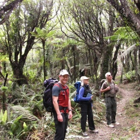 Coastal Fiordland forest hiking