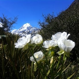 Mt Cook - mountain and lillies