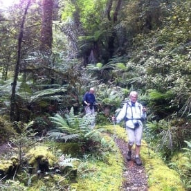 Walking on the Hollyford Track