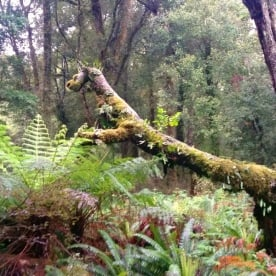 hollyford forest creature