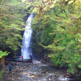 Homer Falls on the Hollyford Track