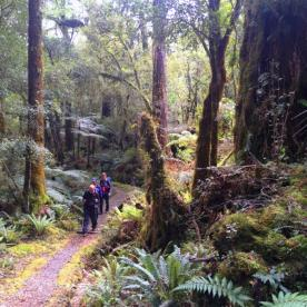 hollyford track forest