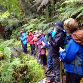 hikers in milford track forest