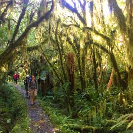 Rainforest on the Milford Track