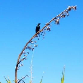 tui on flax flower