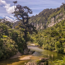 Porarari river, Paparoa National Park West Coast New Zealand