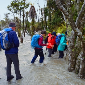 hikers crossing a stream in the hollyford valley