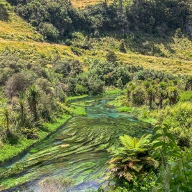 Putaruru Blue Springs at Te Waihou Walkway, Waikato New Zealand