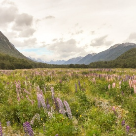 Eglinton Valley, Fiordland New Zealand