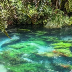 Blue Springs at Te Waihou Walkway, Waikato New Zealand