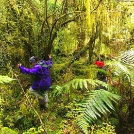 Somewhere on the Hollyford track!