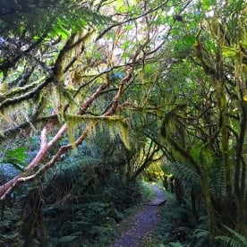 The enchanted forest on the Milford Track
