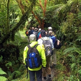 Walking the Milford Track