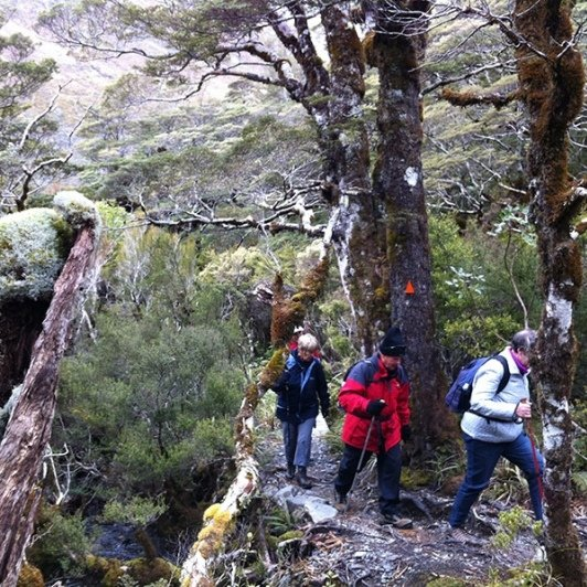 Hiking Arthurs Pass National Park