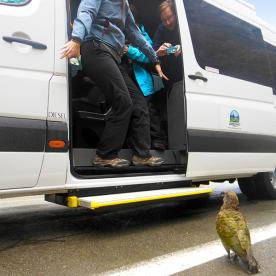 This cheeky kea is hassling our guests at Fiordland National Park