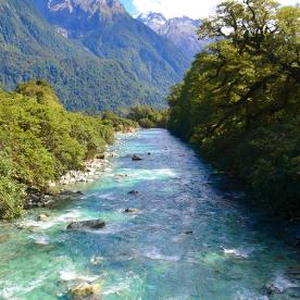 view on hollyford track river new zealand