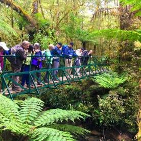 Checking out the streams and amazing tree ferns on the Hollyford