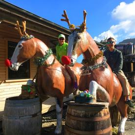 Christmas Reindeers in New Zealand!