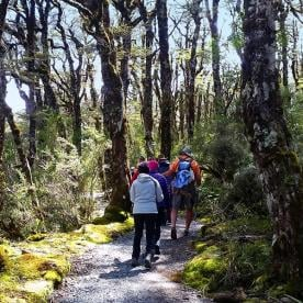 Hiking Paparoa National Park