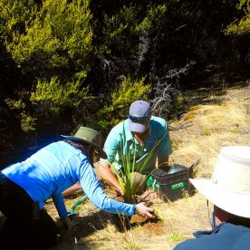 Planting a native tree at Mou Waho Island like we do every time we visit this special place