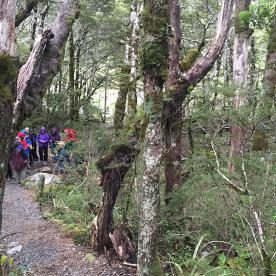 Learning about conservation in Arthurs Pass