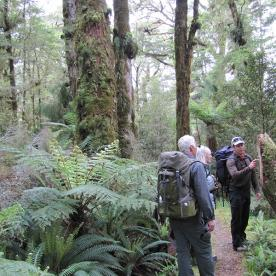 Your guide on the Hollyford Track